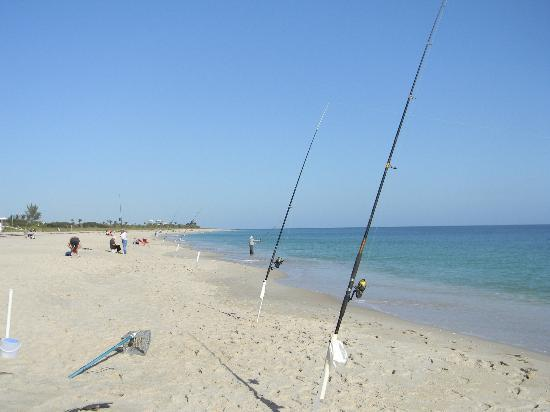 Sea Spray Inn Surf Fishing At South Beach Park