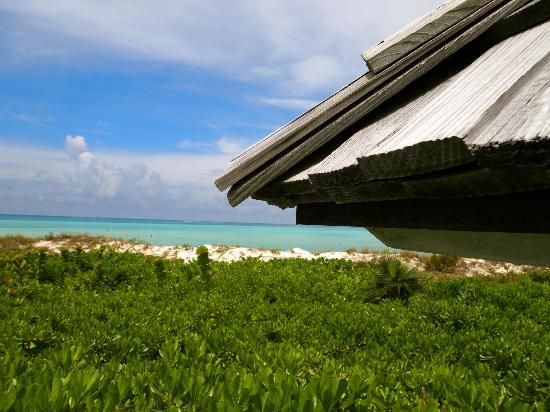 COMO Parrot Cay, Turks and Caicos: View from our pool daybed.