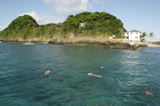 Northeast Coast, Tobago: Great snorkeling