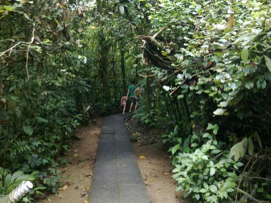 Termales del Bosque: Trail to the hotsprings