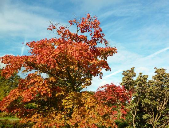 Nymans Gardens and House: Autumn colour
