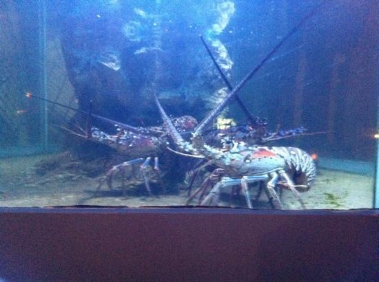 Aux Quatre Vents: the lobster tank