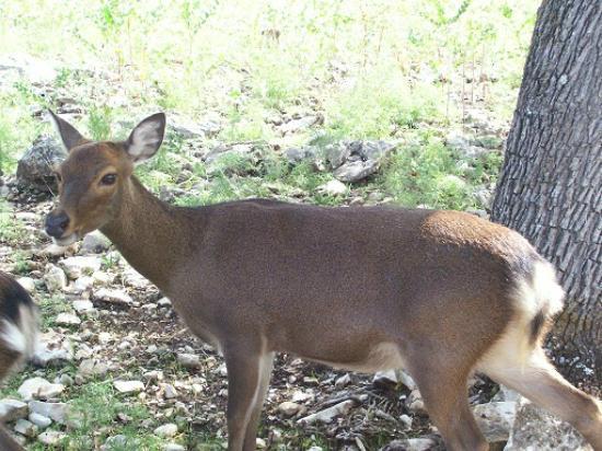 Natural Bridge Wildlife Ranch: Wildlife Ranch