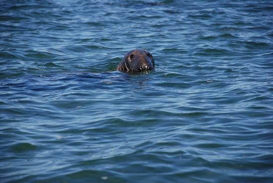 Anchorage on the Cove: The friendly seal on our boat tour