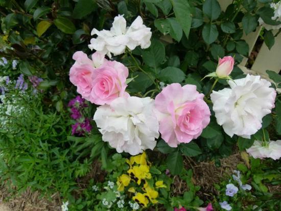 Reid's Place: Roses