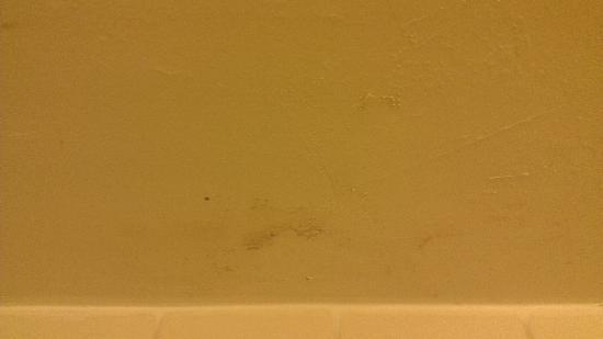 Days Hotel Allentown Airport / Lehigh Valley: Mold on shower