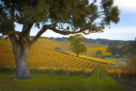 Longview Vineyard Macclesfield Australia Top Tips