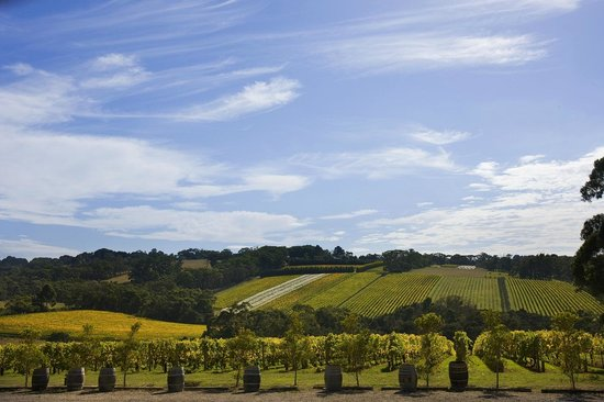 Flinders, Australien: Mornington Peninsula Winery