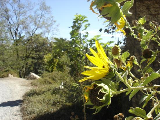 Orchard Hill Country Inn: Sunflowers in the garden