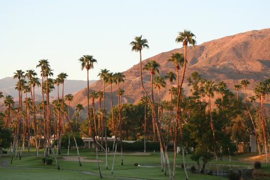 Omni Rancho Las Palmas Resort & Spa: Beautiful early morning light