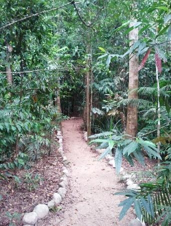 Daintree Region, Australië: Path