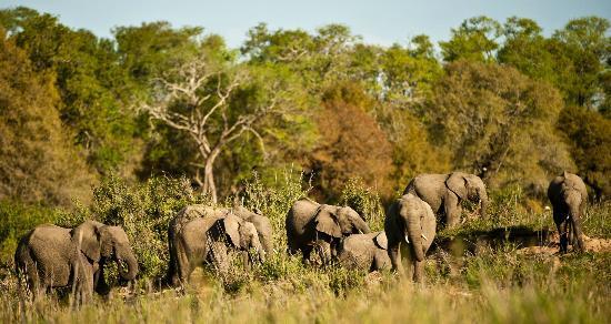 Inyati Game Lodge: Elephant conference
