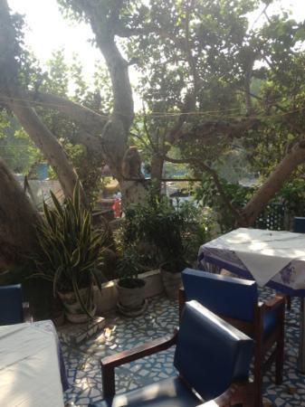 Maya Hotel & Restaurant: rooftop restaurant