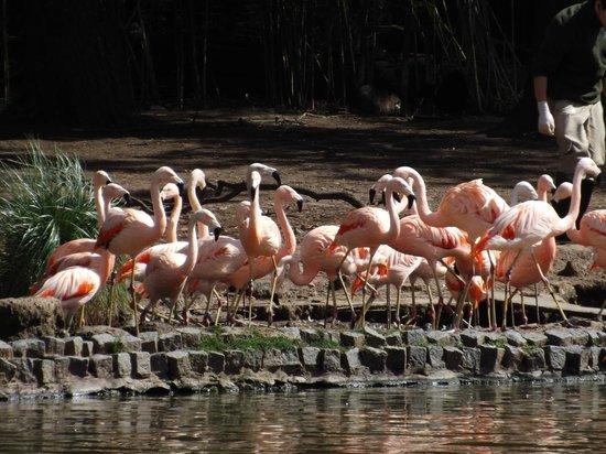 Zoo de Buenos Aires: Graças