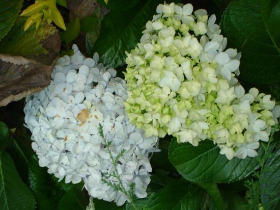 Kluney Manor: Flowers In the Garden