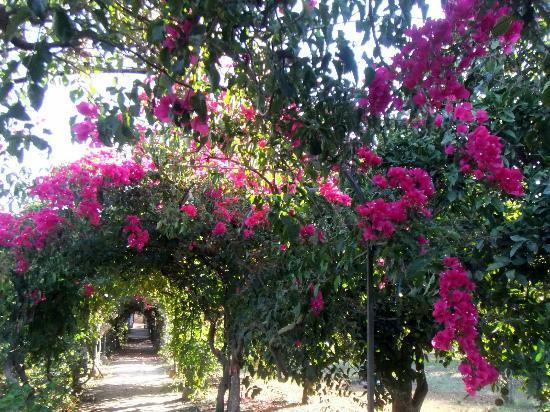 Quinta da Praia das Fontes: The first view of the morning