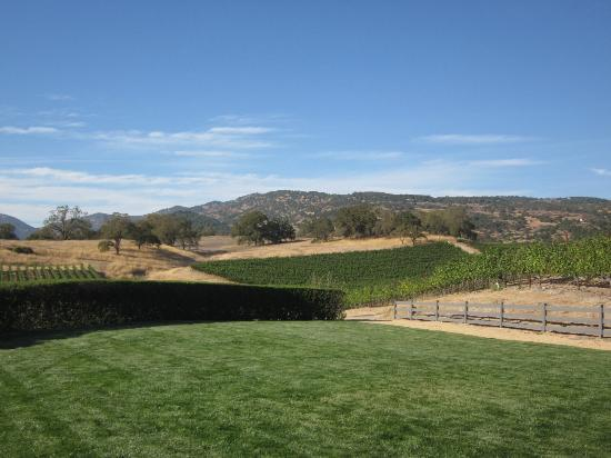William Hill Estate Winery: Great view