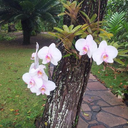 Pousada Jacaranda: Orquidea