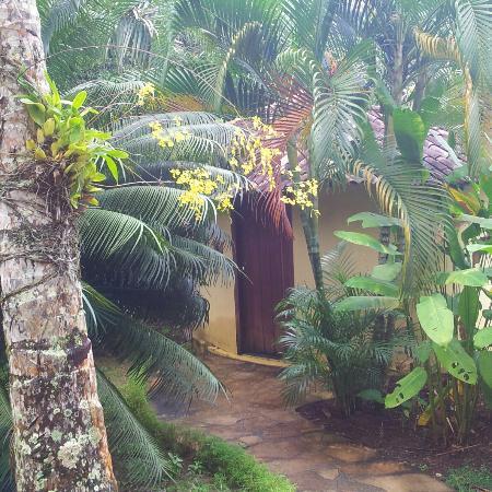 Pousada Jacaranda: Orquídea chuva de ouro