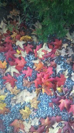 Golden Eagle Resort: Gorgeous tree dropped artificial looking leaves on the pebble path.