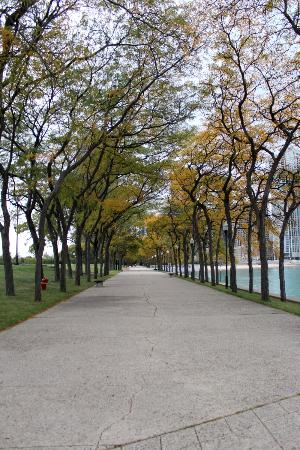 Milton Lee Olive Park: The path along the lake during the fall