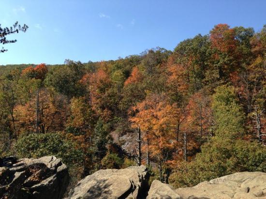 Skyland: View along the White Canyon Trail