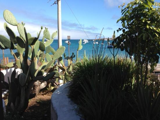 Casa Opuntia Galapagos: Vista do hotel