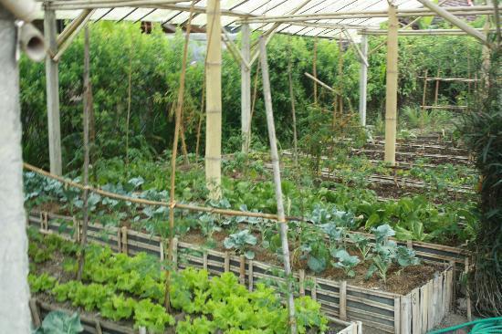 Bio Garden Picture Of Swasti Eco Cottages Ubud Tripadvisor