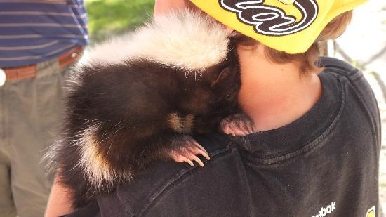 McCarthy's Wildlife Sanctuary: adorable skunk