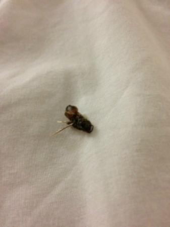 Howard Johnson - Kitchener Conestoga: bee found in bed