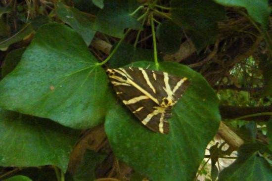Valley of the Butterflies (Peta Loudhes): Paros_Moth Park