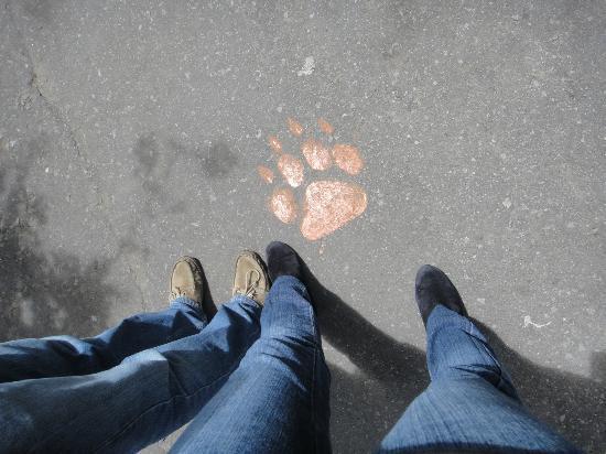 Guayllabamba, เอกวาดอร์: Huellas en el piso que guían el camino a seguir