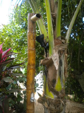 Indra Inn : Bamboo Shower