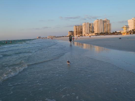 Clearwater Beach: Beach view
