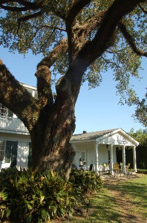 Ashton's Bed and Breakfast: 200 year old oak outside the room
