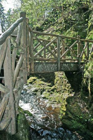 Glen Grant Whisky Distillery and Garden : Twig bridge in the gardens, super cool!