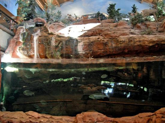 Huge freshwater aquarium picture of bass pro shops for Fish store las vegas