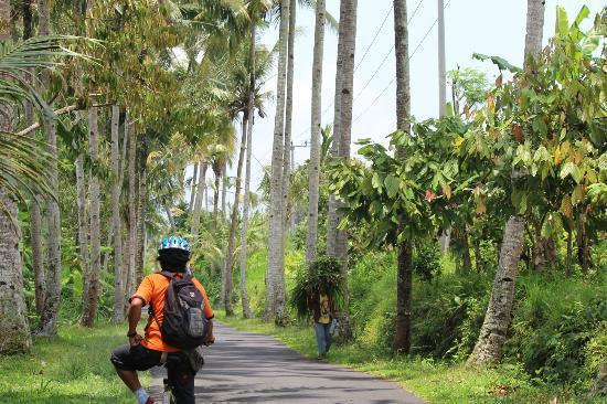 Halo Bike Cycling Tour : a beautiful ride through peaceful scenery