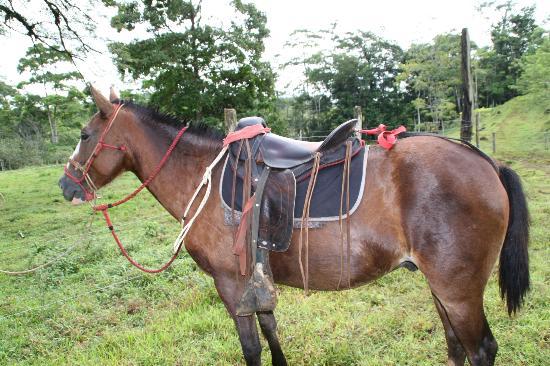 Posada Cielo Roto: Uno de los caballos de Cielo Roto