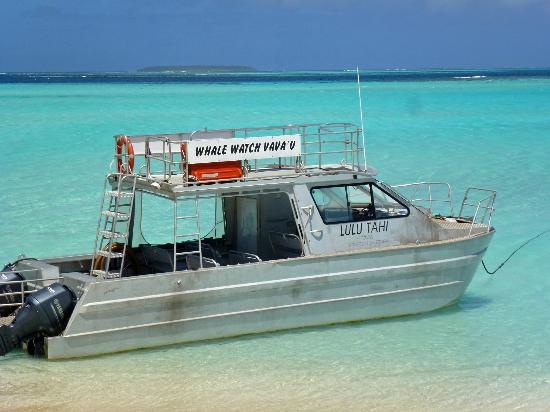 Mounu Island Resort: The boat that takes you out to the Whales