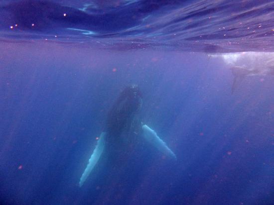 Mounu Island Resort: The Whales