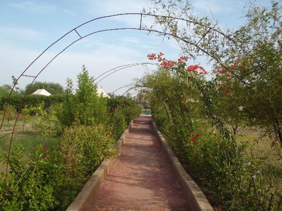 Les Jardins d'Issil: rose gardens
