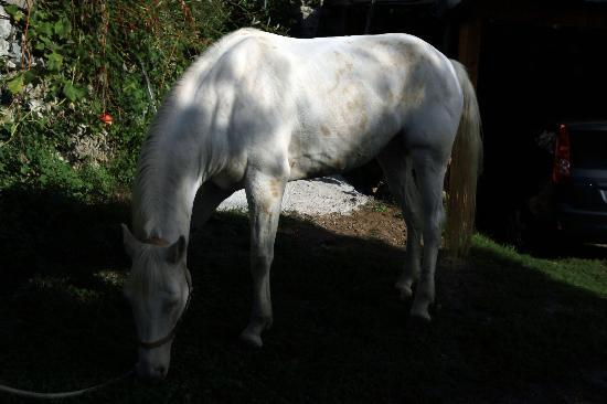 MiraMare Bed&Breakfast: Horse raised by the host 