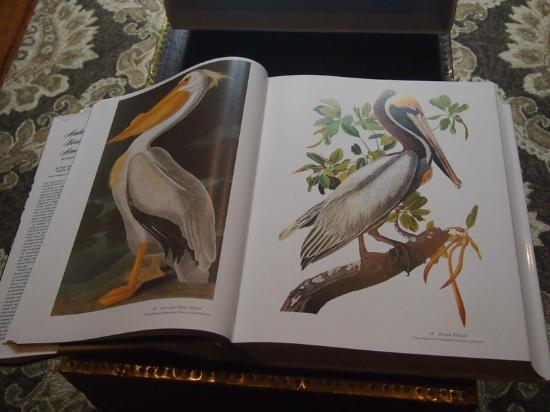 ‪أودوبون كوتيدجيس: Audubon's book of birds on the coffee table - my Granny's fav, the Brown Pelican‬