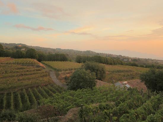 Agriturismo Le case del merlo: les vignes à l'aube