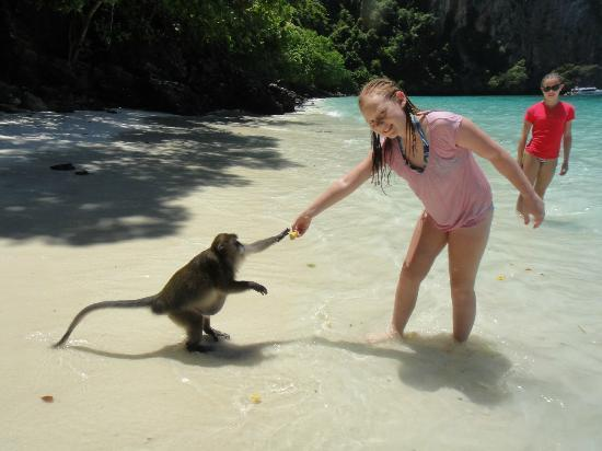 Phuket Sail Tours: Feeding a monkey.
