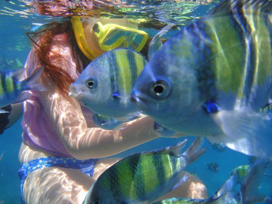 Phuket Sail Tours: Snorkeling aroung the Phi Phi islands