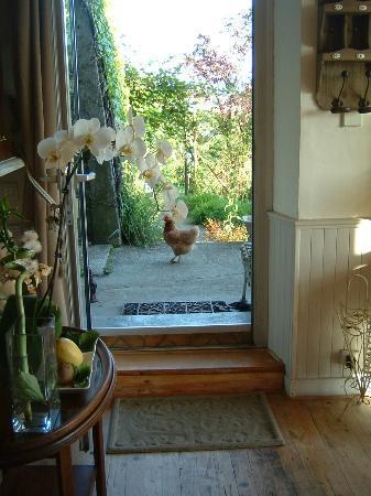 Les Terrasses du Lac: La jardin... et sa poule