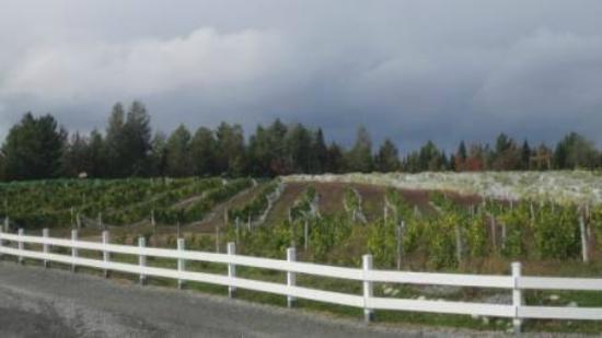 Le Cep D'Argent: View across the fields