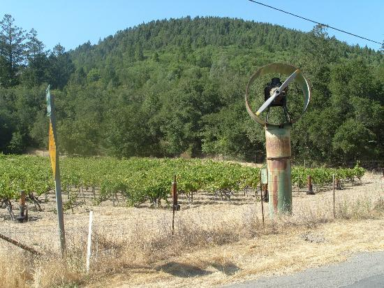 Calistoga Bikeshop: Calistoga Vineyard